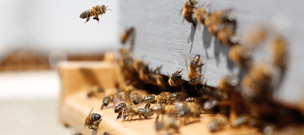 Bee Downtown: How One Company is Actually Saving the Bees